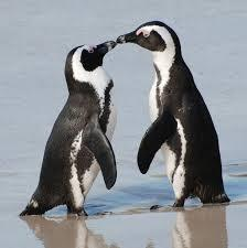 what is scientific name of penguin?