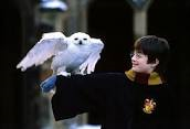 What does Hedwig do for the winter?