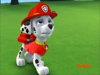 what breed is marshall? - the marshall - paw patrol trivia quiz - fanpop