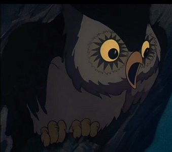 In which film did this owl briefly appear?