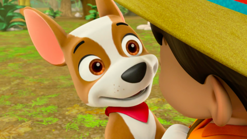 What is Tracker's membership number of the PAW Patrol?