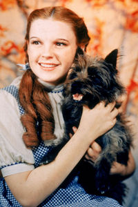 What was the name of Dorothy's dog from a 1939 classic The Wizard Of Oz, also from a novel with a similar title?