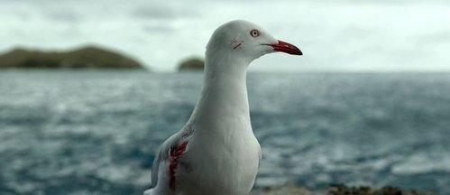 Risultati immagini per The Shallows seagull