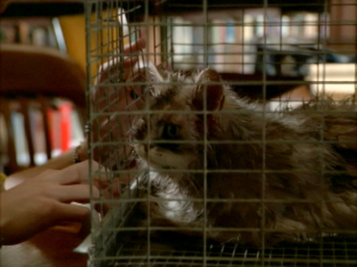 What name did Oz suggest for the zombie cat in S03E02 Dead Man's Party?