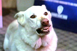 What was Max's dog's name in 'The Lost Boys' ?