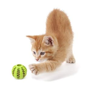 Are Cats good problem solvers?