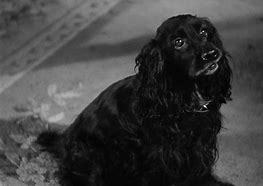 What is the name of the dog in the.... 1940 film,Rebecca ?
