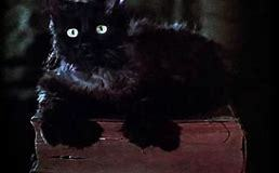 This cat is from which film ?