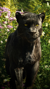 Who was the voice of Bagheera in the 2016 live version of Jungle Book