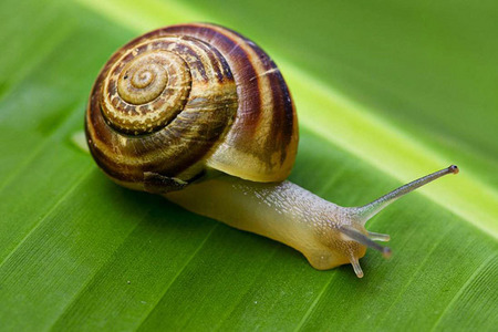 How many teeth does a escargot have?