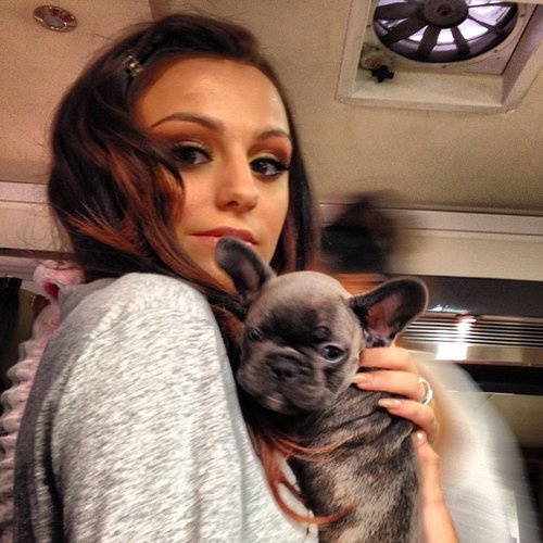 Which is Cher Lloyd's french bulldog's name ?