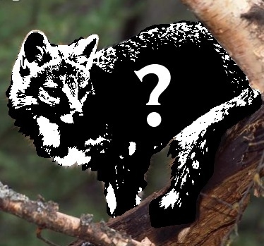 Which of the following fox species can climb trees?