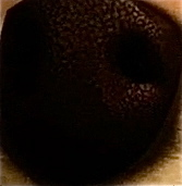 who's nose is this?