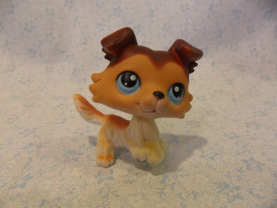 What number is Sage Bond from Littlest Pet Shop Popular?