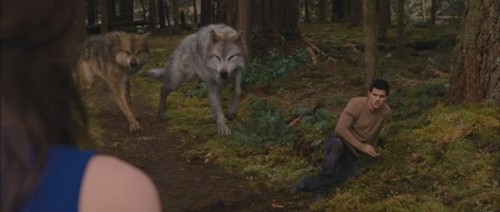 (BD2) Who did enjoy the most when Bella hits Jacob?
