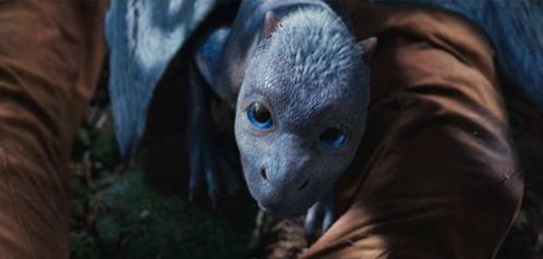 Where did eragon find Saphira's egg?
