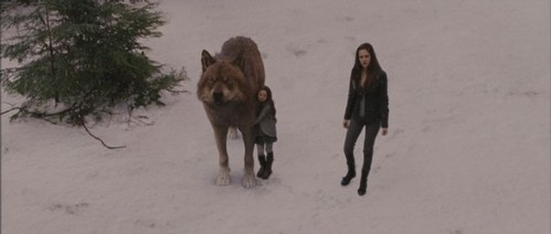 What did Renesmee say here?