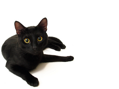 In which country are black cats considered lucky?