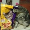 Meooowww! seum photo