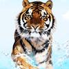 face of wild Pantherpop photo