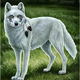 AlphawolfAlisha