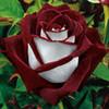 uploaded900 photo
