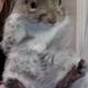 feetsquirrel's photo