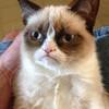 Grumpy Cat <3 Renarimae photo