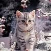 Christmas Cutie yorkshire_rose photo