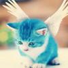 adorable angel kitten greyswan618 photo