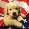 patriotic puppy 2 greyswan618 photo