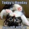 cute kitty meme greyswan618 photo