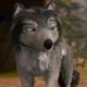 vmanbetawolf
