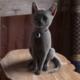 KittenWitch's photo