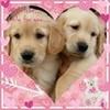 puppy love greyswan618 photo