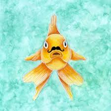 goldfish with a mustache