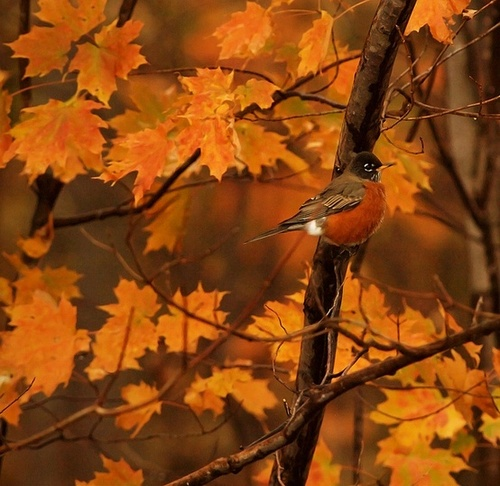 Autumn birds ~ ♥