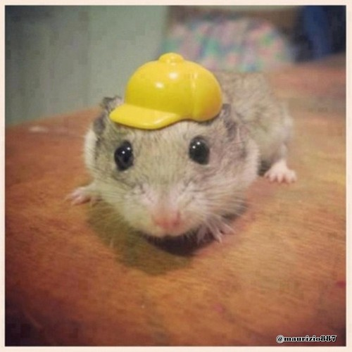 justin ,and his hamster CAP