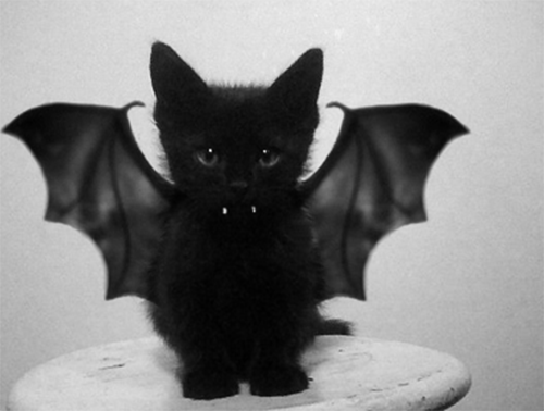 Cute Kitty Vampire