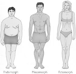 Body type scale, which one is yours?