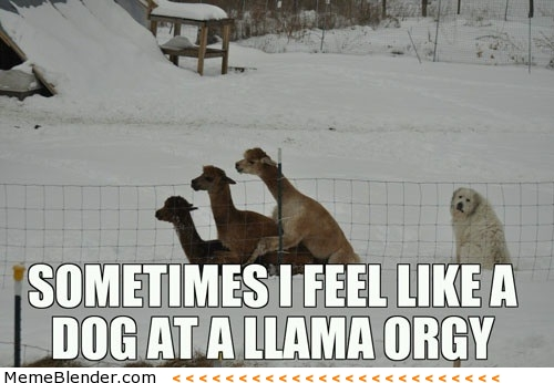 Dog at a lama orgy