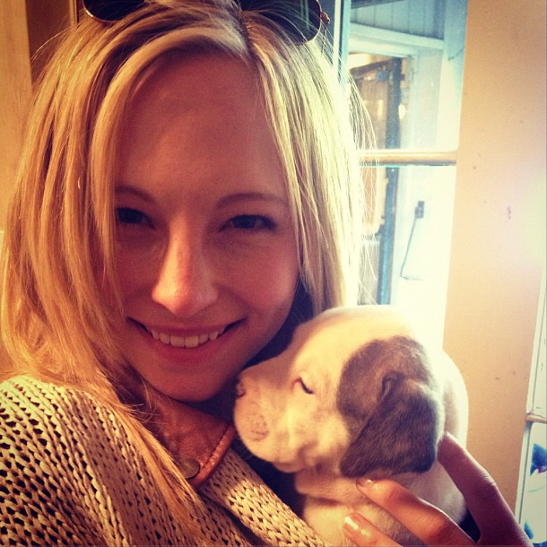 REIRA SATO ► byun jungha - Page 2 New-Instagram-photo-Candice-with-a-puppy-candice-accola-33799348-610-610