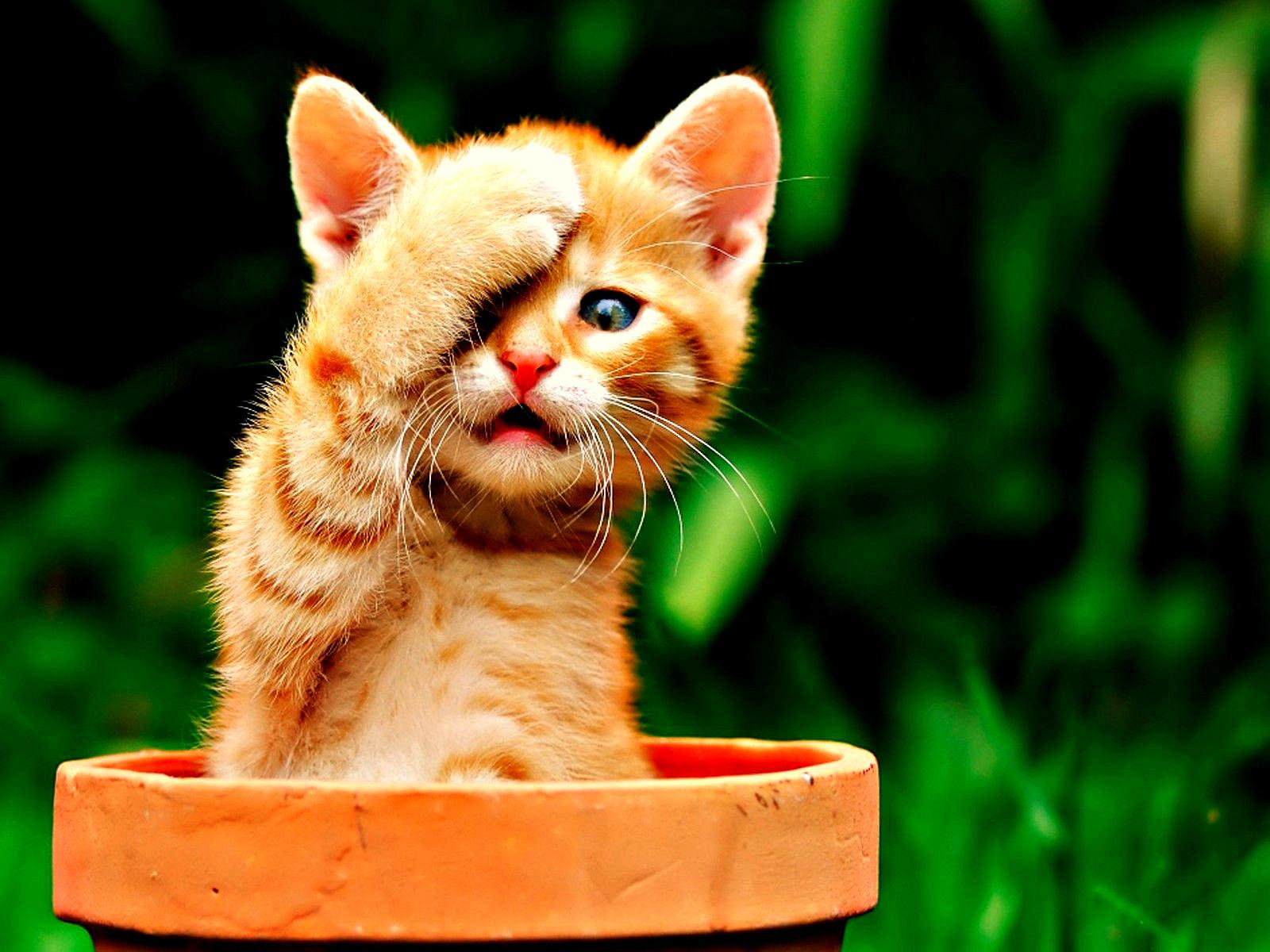 Kitten Cats Wallpaper 34352405 Fanpop Page 9