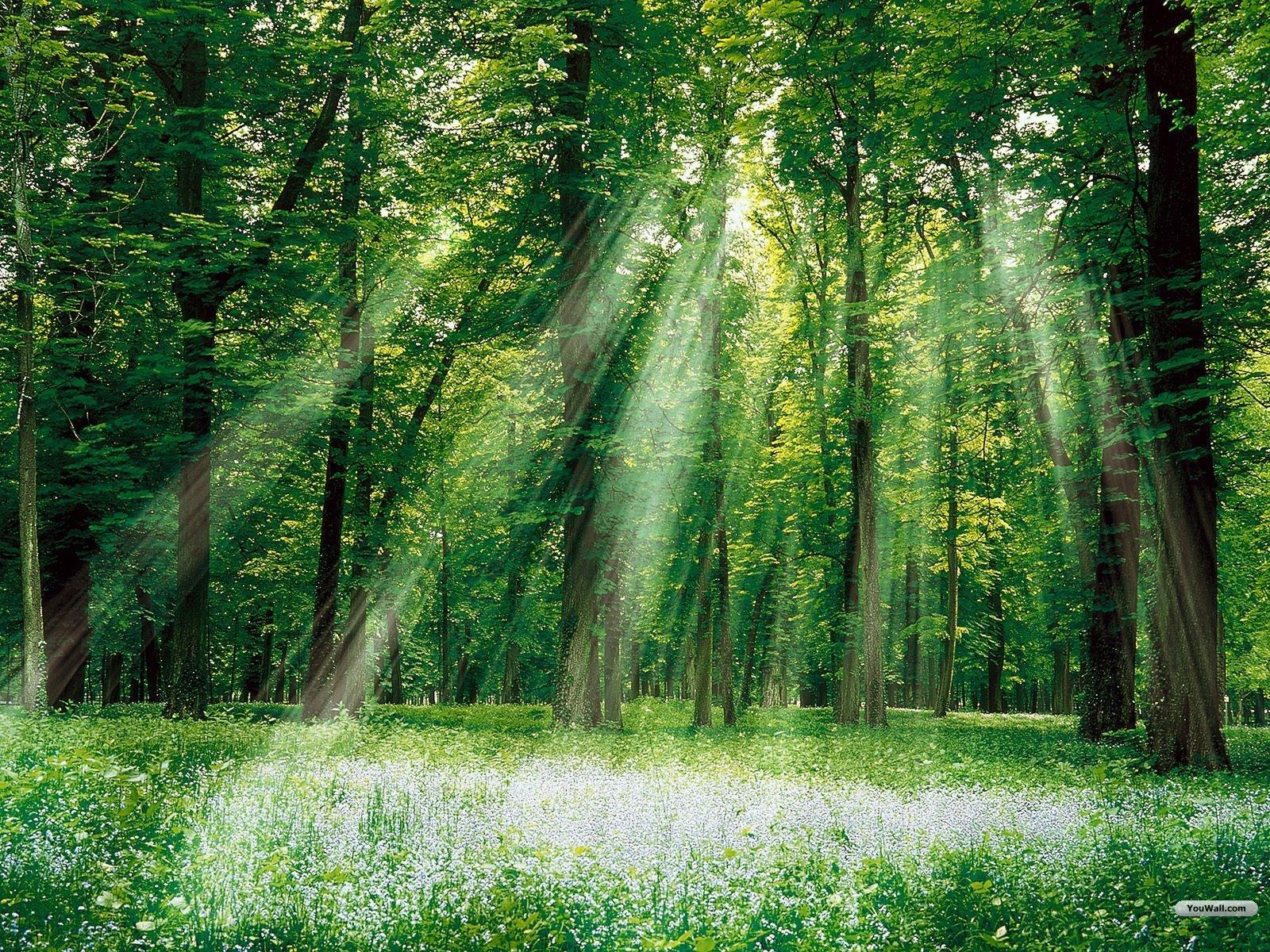 Green Forest Wallpaper Colors Wallpape 心が落ち着く 森 の
