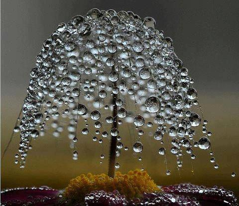 magical drops of imagination