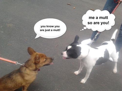 आप are a mutt?