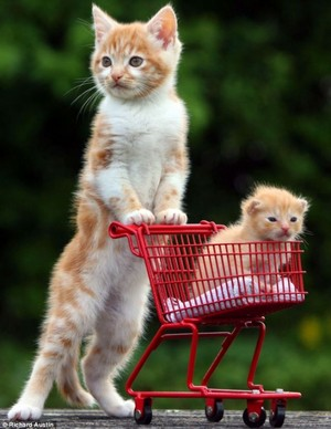 cat pushing baby in a basket