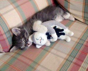 Cat Sleeping With a Stuffed Animal