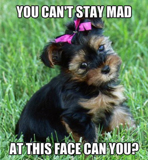 You cant stay mad