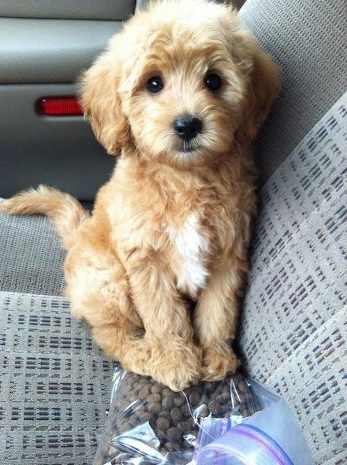 cute little dog - Dogs Photo (36195064) - Fanpop
